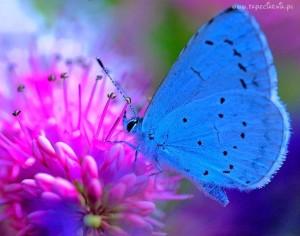 167285_motyl_na_kwiatku